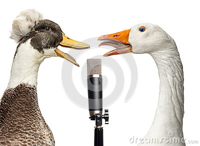 Duck and goose singing into a microphone, isolated