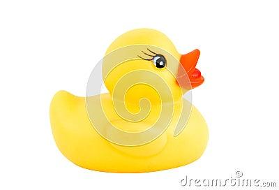 Duck new 1