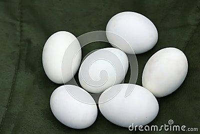 Duck s egg