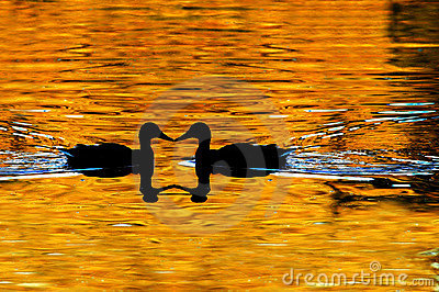 Duck Silhouetted on Golden Pond