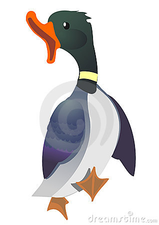 Free Duck Walking With Open Beak Stock Photos - 8280253