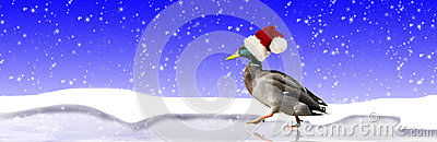 Duck Wearing Santa Hat