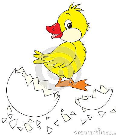 Duckling and broken egg
