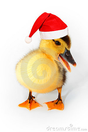 Free Duckling With Red Santa Hat Isolated On White  Royalty Free Stock Photography - 17416837