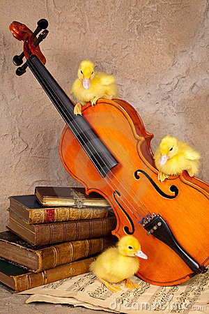 Ducklings on classical violin