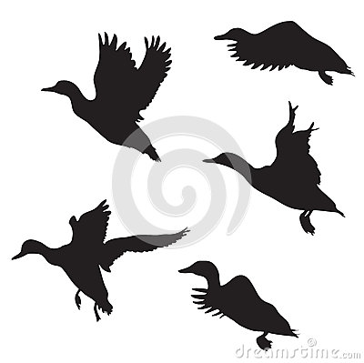 Free Ducks Royalty Free Stock Images - 36472479