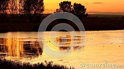 Ducks on calm lake at sunset