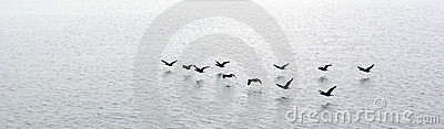 Ducks flying over water