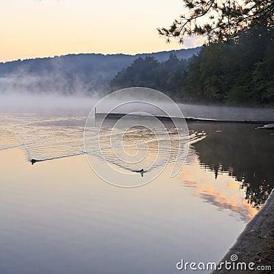 Ducks and Foggy Dock