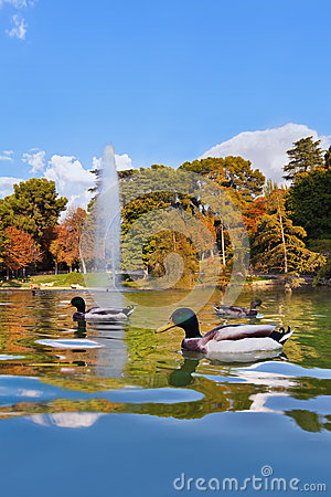 Ducks in pond near Crystal Palace - Madrid