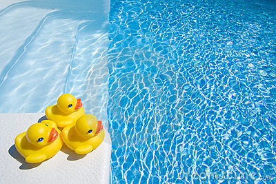 Ducks by pool