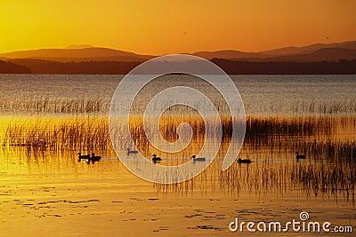 Ducks Swimming at Sunrise Lake Champlain