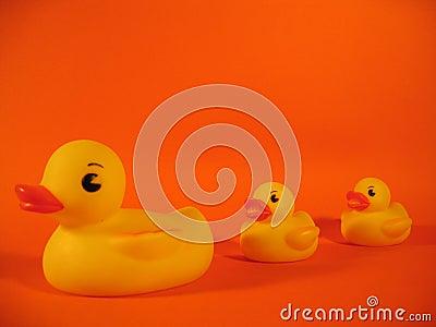 Ducky rodziny gumy