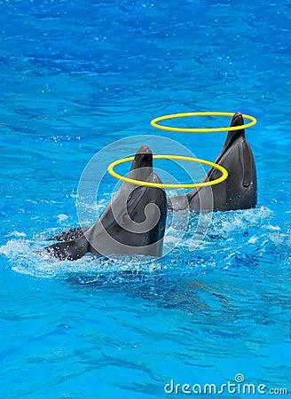 Due delfini che giocano con gli anelli