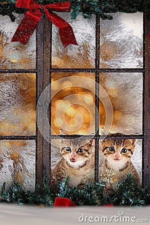 Due gatti gattini che si siedono alla finestra con il decorati di natale immagine stock - Finestra che non si chiude ...