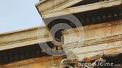Duifzitting bovenop oude marmeren die bouw met afgietsel wordt verfraaid stock videobeelden