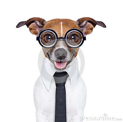 Free Dumb Business Dog Royalty Free Stock Images - 37050359