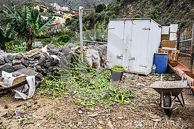 A dump of rotten green bananas on an organic farm. Canary Islands, Tenerife Stock Photo
