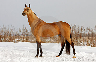 Dun Horse Exterior Royalty Free Stock Photo - Image: 15636705