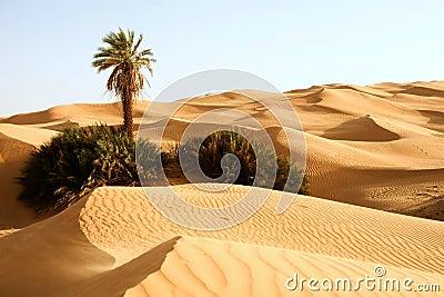 Dunas de areia com um â Awbari da palma, Líbia