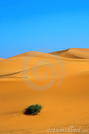 Dunas de arena y un penacho solo de la hierba
