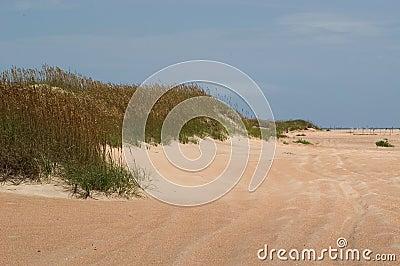Dunas y reunión de la playa