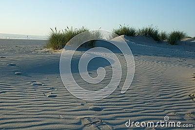 Dune de sable herbeuse