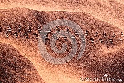 Dune-footprints