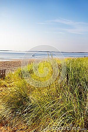 Dune grass Maine beach