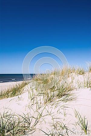 Dune at ocean