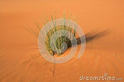 Dune Vegetation