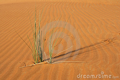 Dune Vegetation Stock Photo - Image: 22986670