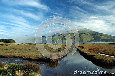 Dunedin peninsula, New Zealand