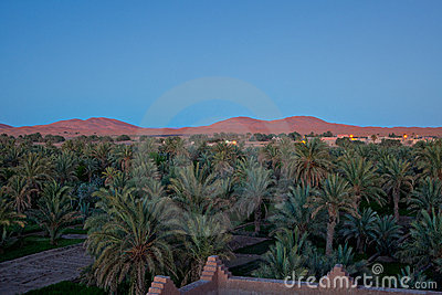 The dunes of Erg Chebbi at dusk (3).