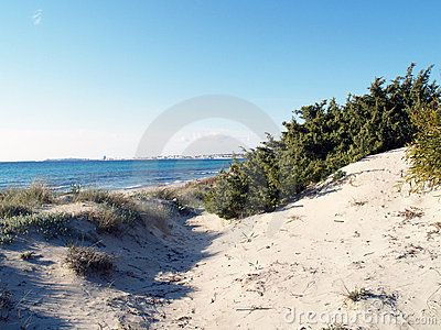 Dunes, grass, beach and sea