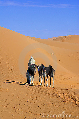 Dunes of Sahara and camel ride