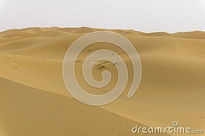 Dunes in sahara desert