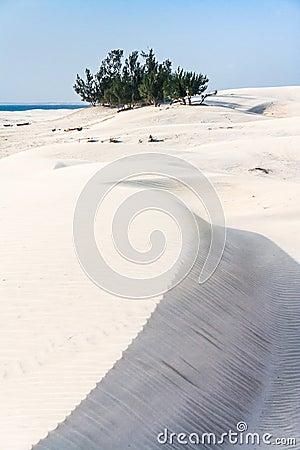 Dunes and wild beach