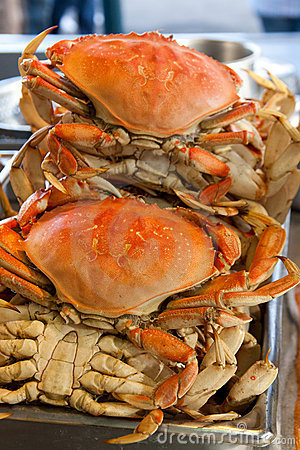 Free Dungeness Crabs Stock Photos - 13046753