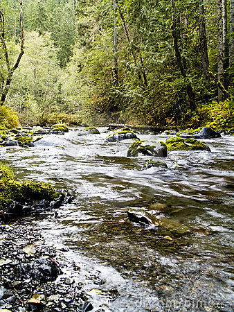 Free Dungeness River Stock Photo - 3802780