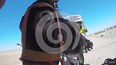 DUNHUANG - 9 DE JULHO: Turistas no carro de asno no deserto de Gobi, o 9 de julho de 2015, província de Gansu, China video estoque