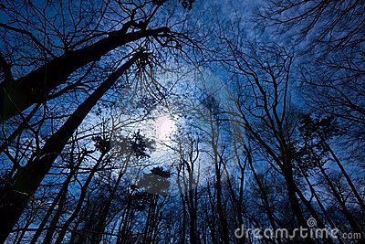 Dunkler Wald