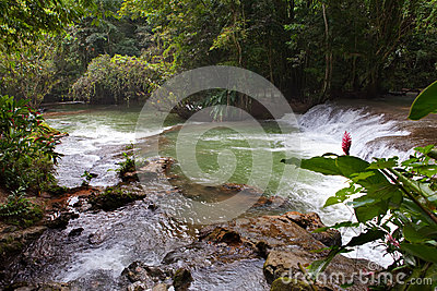 Dunn s River waterfalls.Landscape in a sunny day