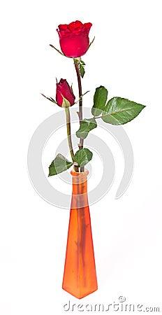 Duo Rose in the Vase