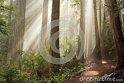 Durch die Bäume