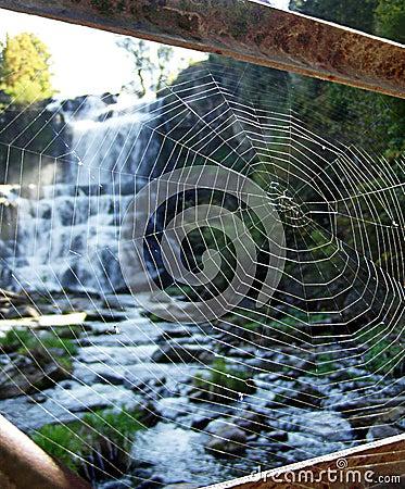 Durchaus ein Fang - Spinnenweb