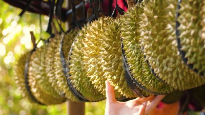 Durians in de markt stock video