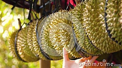 Durians no mercado video estoque