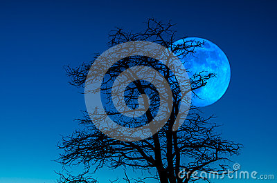 Dusk Moon