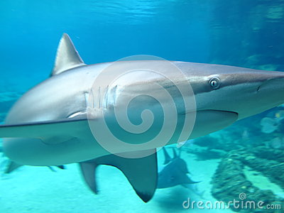 Shark closeup